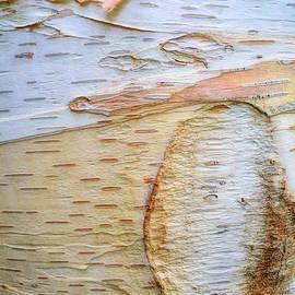 Todd Breitling - Birch Tree Bark
