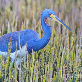Kris Hiemstra - Bird Beauty