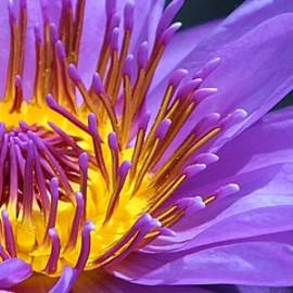 Bruce Bley - Purple Waterlily 2