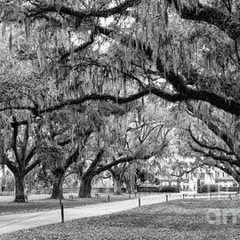 Dawna  Moore Photography - Boone Hall Plantation Avenue of Oaks Mount Pleasant South Carolina