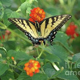 Debra Crank - Butterfly and Flower