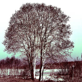 Jouko Lehto - By the Lake