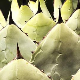 Jean Noren - Cactus Pattern