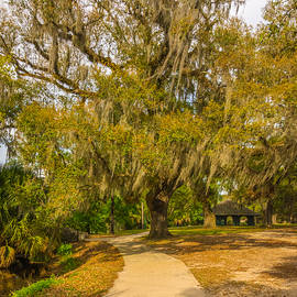 Steve Harrington - City Park New Orleans