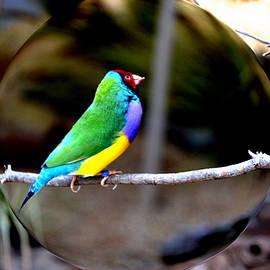 Anand Swaroop Manchiraju - Colorful Bird