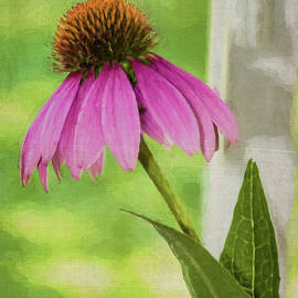 Cathy Kovarik - Cone Flower