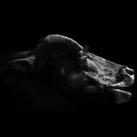 Burak Turkmen - Cow Noir
