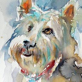 Cute dog - Kovacs Anna Brigitta