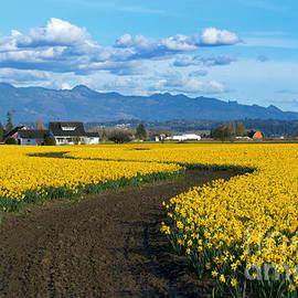 Mike Dawson - Daffodil Lane
