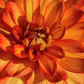 Bruce Frye -  An Orange Dahlia