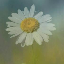 Arlene Carmel - Daisy Blue