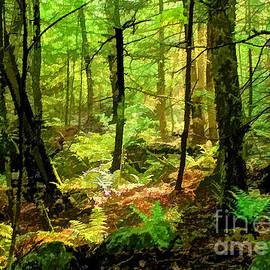 Betsy Zimmerli - Deep Woods