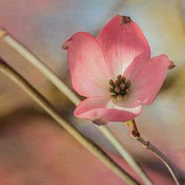 Angie Vogel - Dogwood Blossom