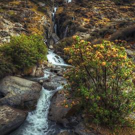 Amit Zakay - Down the river