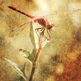 Jerri Moon Cantone - Dragonfly