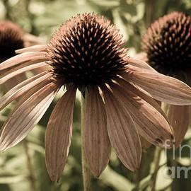 Andrea Anderegg  - Echinacea Garden