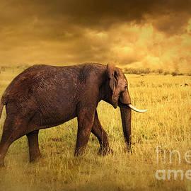 Charuhas Images - Elephant