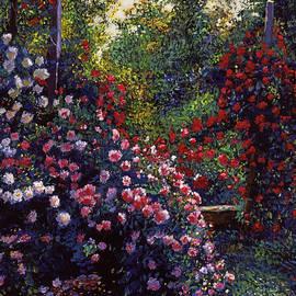David Lloyd Glover - Evening Roses