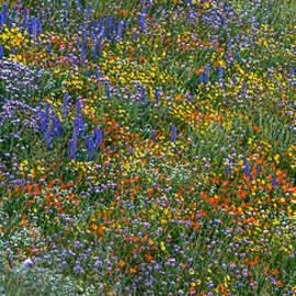 Howie Garber - Explosion of Color