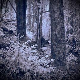Jouko Lehto - Fairy forest