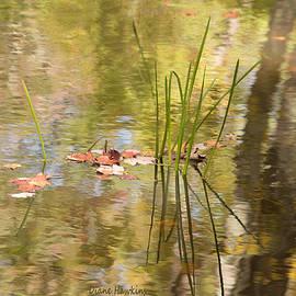 Diane Hawkins - Fall Reflections