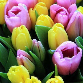Lali Kacharava - Field of tulips