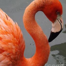 Sara  Raber - Flamingo Profile