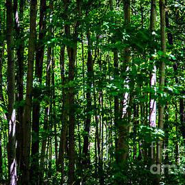 Olga Photography - Forest