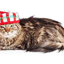 Funny Grumpy Christmas Cat - Susan Schmitz