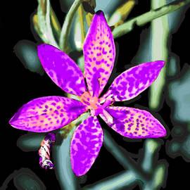 Bruce Nutting - Gods Colorful World of Flowers