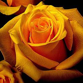 Bonita Brandt - Golden Petals