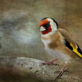 Chris Smith - Goldfinch