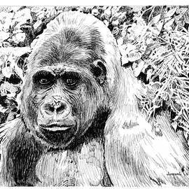 Joseph Juvenal - Gorilla My Dreams