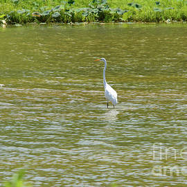 Ruth Housley - Great Egret Watching And Waiting