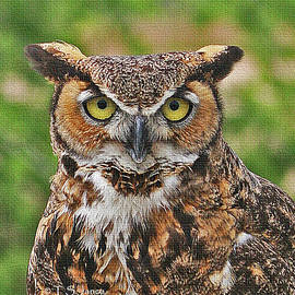 Tom Janca - Great Horn Owl Nature Educator