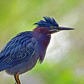 Rodney Campbell - Green Heron