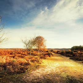 Svetlana Sewell - Hampshire Landscape