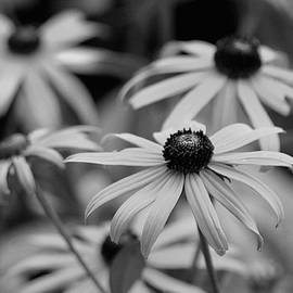 Living Color Photography Lorraine Lynch - He Loves Me, He Loves Me Not