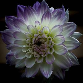 Linda Foakes - Hint of Lilac