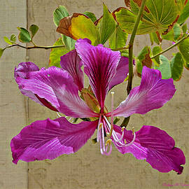 Barbara Zahno - Hong Kong Orchid