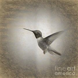 Janice Rae Pariza - Hummingbird in Charcoal