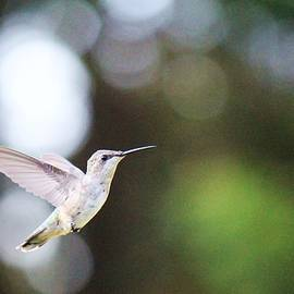 Nida Chioco - Hummingbird in Flight