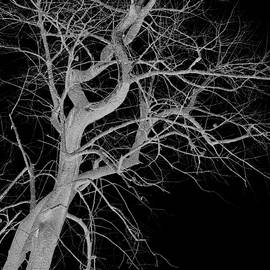 Lesa Fine - Infared Tree Art Twisted Branches