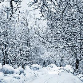 Svetlana Sewell - Into the Woods