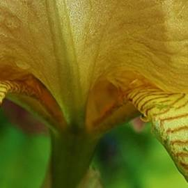 Bruce Bley - Iris macro