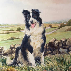 Anthony Forster - Jesse the Border Collie