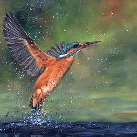 Kingfisher - David Stribbling