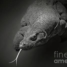 Charuhas Images - Komodo Dragon