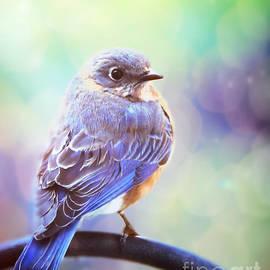 Tina LeCour - Lady Bluebird