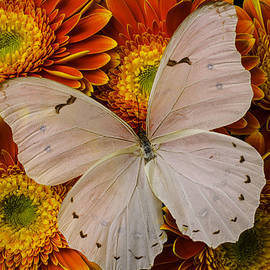 Large White Butterfly - Garry Gay